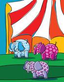 Elephants and circus — Stock Vector