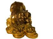 Golden Tiger — Stock Photo