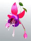 Vector flower fuchsia — Stock Vector