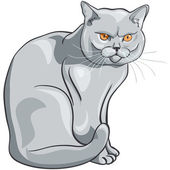Vector british blue cat sits and looks seriously — Stock Vector