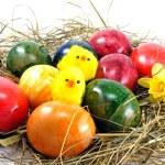 Easter eggs & chicks — Stock Photo