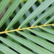 Background palm branch - Stock Photo