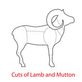 Cuts-of-Lamb-and-Mutton — Vettoriale Stock