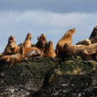 Steller sealion — Stock Photo #4379241