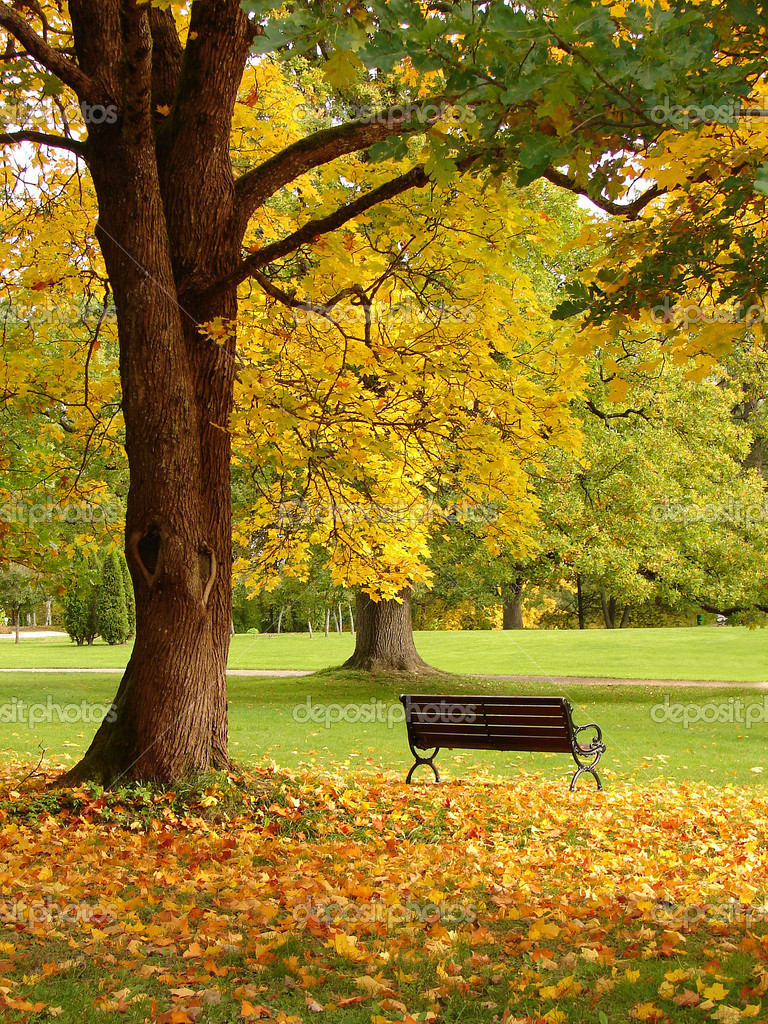 Bench and oak in city park in the autumn                              — Stock Photo #4334359