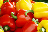 Colorful pepper background — Stock Photo