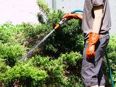 Working watering garden — Stock Photo