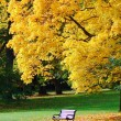 Stock Photo: City park in autumn