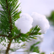 Stock Photo: Frost on Pine