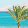 Stock Photo: Umbrellas, Palm Tree, Mountains and Red Sea