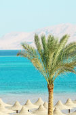 Umbrellas, Palm Tree, Mountains and Red Sea — Stockfoto
