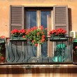 Window flowers — Stock Photo
