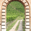 Vineyard view - Stock Photo