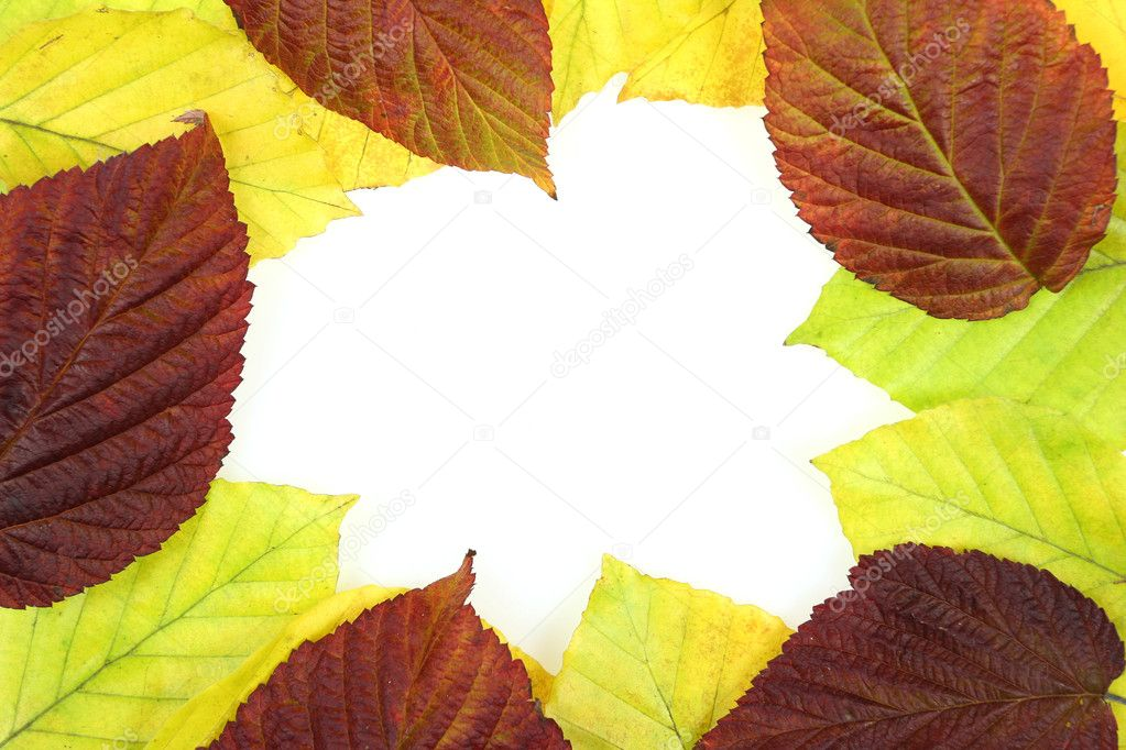 Autumn - colorful October tree leaves. Frame made of beech tree and raspberry bush leaves. — Stock Photo #4509902
