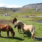 Islandia — Foto de Stock   #4514711