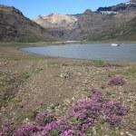 Iceland - National Park — Stock Photo #4519537