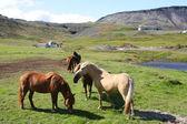 Iceland — Stok fotoğraf
