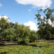 Brisbane Botanical Gardens — Stock Photo