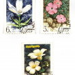 Soviet stamps with flowers — Stock Photo