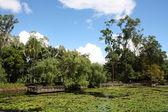 Brisbane Botanical Gardens — Stock Photo