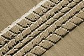 Beach car track — Stock Photo