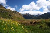 Parque nacional da nova zelândia — Foto Stock