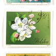 Tree blossom collectible post stamps — Stockfoto #4531835