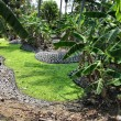 Banana grove — Stock Photo