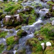 Small mountain stream flowing — Stock Photo