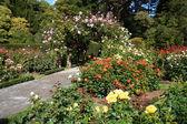 Botanic garden — Stock Photo