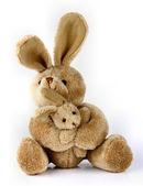 Bunny rabbit cuddly toy — Stock Photo