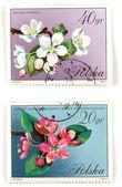 来自波兰的旧收藏邮票 — 图库照片