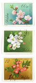 树开花收藏集邮 — 图库照片