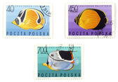 Postal stamps - set with fish — Stock Photo