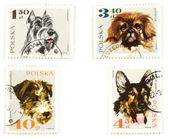 Dogs on Polish postage stamps — Stockfoto