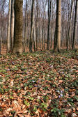 Early spring forest — Stock Photo