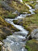 Small stream or brook in Norway — Stock Photo