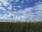 Krásné nebe a divoké trávy — Stock fotografie