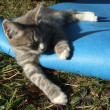 Kitten sleeping on a blue mat — Foto de Stock