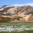 Iceland - Landmannalaugar — Stock Photo #4540597
