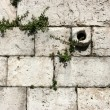Limestone wall background — Stockfoto