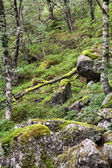 Rogaland — Stock Photo