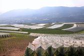 Farming in Italy — Stock Photo