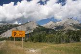 Rocky Mountain Sheep Warning — Stock Photo