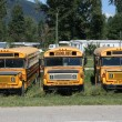 Stock Photo: Old school buses