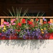 Flowers on balcony — Stock Photo #4612472