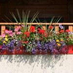 Flowers on balcony — Stock Photo #4612472