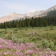Rocky Mountains meadow — Stock Photo