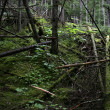 Dark forest — Stock Photo #4612671