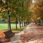 Autumn park — Stock Photo #4644143